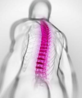 强直性脊柱炎是否会遗传呢